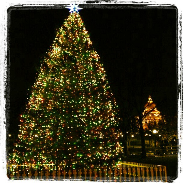 Christmas Tree in the Boston Common