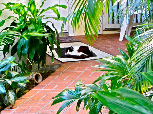 key west cat