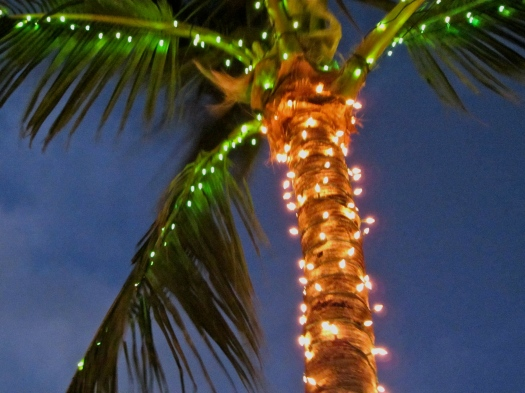 Palm with christmas lights