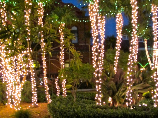 Palms decorated with lights