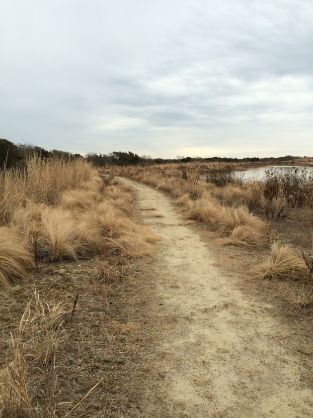 Trail off of Sunset Blvd. in Cape May, NJ